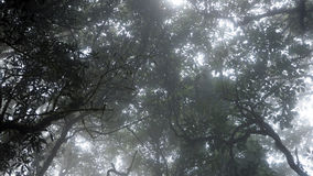 Kiew Mae Pan Rain skog arkivbild