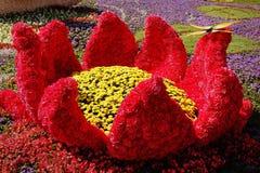KIEW, UKRAINE - 23. AUGUST: Blumenausstellung in Kiew, Ukraine Lizenzfreies Stockbild