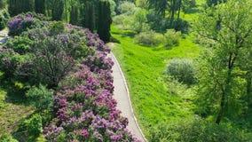Kiew Ukraine Blühende Flieder des Frühlinges in nationalem botanischem Garten Hryshko Ansicht zu Vydubychi-Kloster und zum Fluss  stock video footage