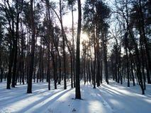 Kiew, Winter-Wald Lizenzfreies Stockfoto