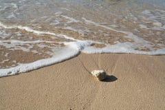 Kiezelsteen in het Zand Stock Foto's