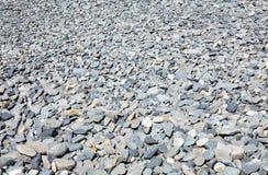 Kiezelsteenstrand met droge stenen Stock Foto's
