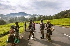 KIGALI, RWANDA - SEPTEMBER 6, 2015: Niet geïdentificeerde mensen De Afrikaanse arbeiders die aan theeaanplanting werken stock afbeelding