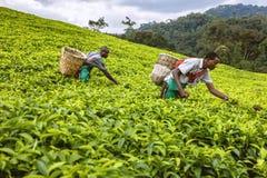 KIGALI RWANDA - SEPTEMBER 6, 2015: Oidentifierade arbetare De afrikanska arbetarna Arkivfoton