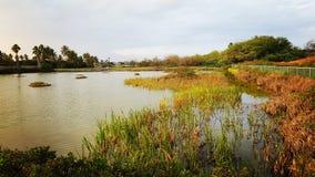 Kihei våtmarker, Maui Royaltyfri Bild