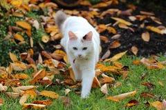 Kitten, cat, autumn Stock Image