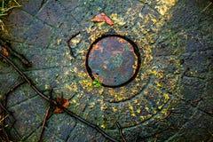 Kijów liści manhole pokrywa Obraz Royalty Free