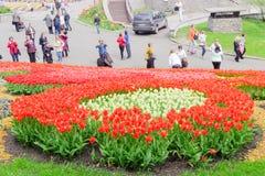 Kijów Ukraina, Kwiecień, - 23, 2016: Kwiatu łóżko czerwoni i biali tulipany na tulipanach powystawowych Obrazy Stock