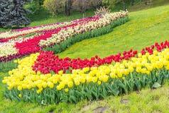 Kijów Ukraina, Kwiecień, - 23, 2016: Stubarwni tulipany w kształtują teren parka Tulipany powystawowi