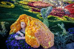 KIJÓW UKRAINA, SIERPIEŃ, - 22: kwiat wystawa Zdjęcie Royalty Free