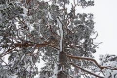 Kije zakrywający z śniegiem fotografia royalty free