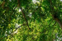 Kijk door onder de boom Royalty-vrije Stock Fotografie