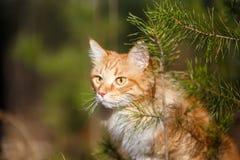 Kijk nieuwsgierige kat Stock Afbeelding