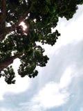 Kijk omhoog aan de hemel Royalty-vrije Stock Foto's