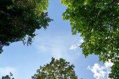 Kijk omhoog aan de hemel en de bomen stock foto's