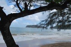 Kijk rond de boom en recht op de oceaan Royalty-vrije Stock Afbeeldingen