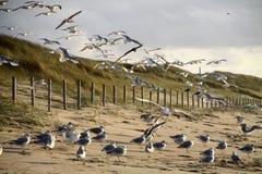 kijkduin seagulls Στοκ φωτογραφίες με δικαίωμα ελεύθερης χρήσης