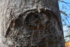 Kijkend boom in het bos Stock Foto's