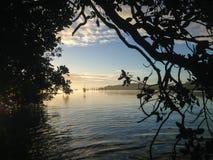 Kijkend door de mangroveboom op Kerikeri-Inham, Nieuw Zeeland Stock Foto's