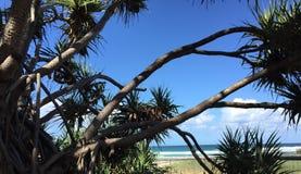 Kijkend door de Schroefpijnboom, nobbys strand, Queensland, Australië stock foto