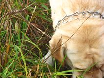 Kijkend hond 2 stock afbeelding