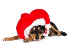 Kijkend hond met grappige Kerstmanhoed Stock Foto