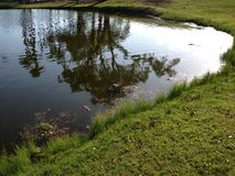 Kika alligatorn Royaltyfri Bild
