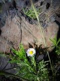 Kika blommor Arkivfoto