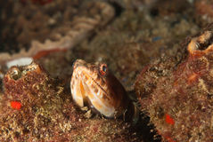 kika för lizardfish royaltyfri fotografi