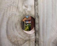 Kika in i den tillbaka trädgården Royaltyfri Fotografi