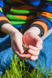 Kikker in de handen van een kind Stock Foto's