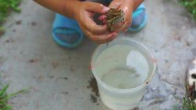 Kikker in de handen van een kind van vijf jaar met water stock videobeelden