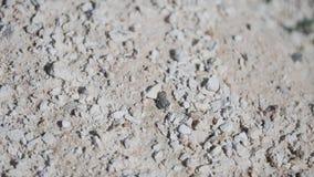 Kikker die op droge rotsachtige grond springen Het mooie wild droogte Woestijn stock videobeelden