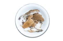 Kikker in een container voor koken geïsoleerd op wit royalty-vrije stock foto