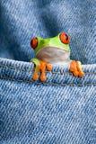 Kikker in een zak Royalty-vrije Stock Fotografie