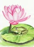 Kikker en lotusbloem Royalty-vrije Stock Afbeeldingen