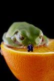 Kikker en miniatuurmens Stock Foto's