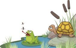 Kikker en schildpad bij het ontwerp van de vijverhoek Stock Foto's