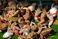 Kikker klaar te eten. Stock Afbeeldingen