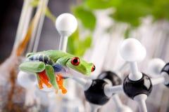 Kikker in laboratorium royalty-vrije stock afbeelding