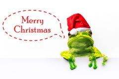 Kikker met Kerstmishoed op witte achtergrond wordt geïsoleerd die Royalty-vrije Stock Afbeelding