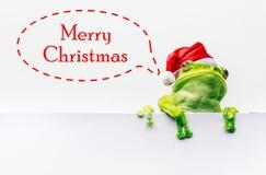 Kikker met Kerstmishoed op witte achtergrond wordt geïsoleerd die Stock Foto's