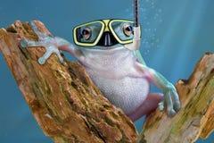 Kikker onderwater Stock Fotografie