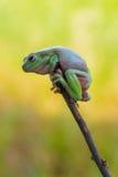 Kikker op de rand van een boombos Stock Fotografie