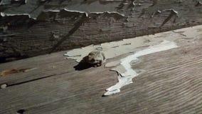 Kikker op doorstane houten stappen stock afbeeldingen