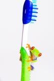 Kikker op een tandenborstel Stock Fotografie