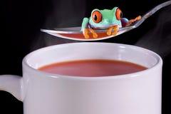 Kikker over hete soep stock foto