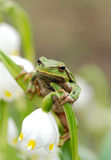 Kikker van de close-up de groene boom op bloem stock fotografie