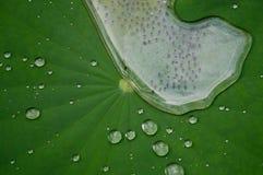 Kikkereieren en regendruppeltjes Royalty-vrije Stock Afbeelding