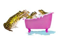 Kikkers die van een schuimbad genieten Stock Foto's
